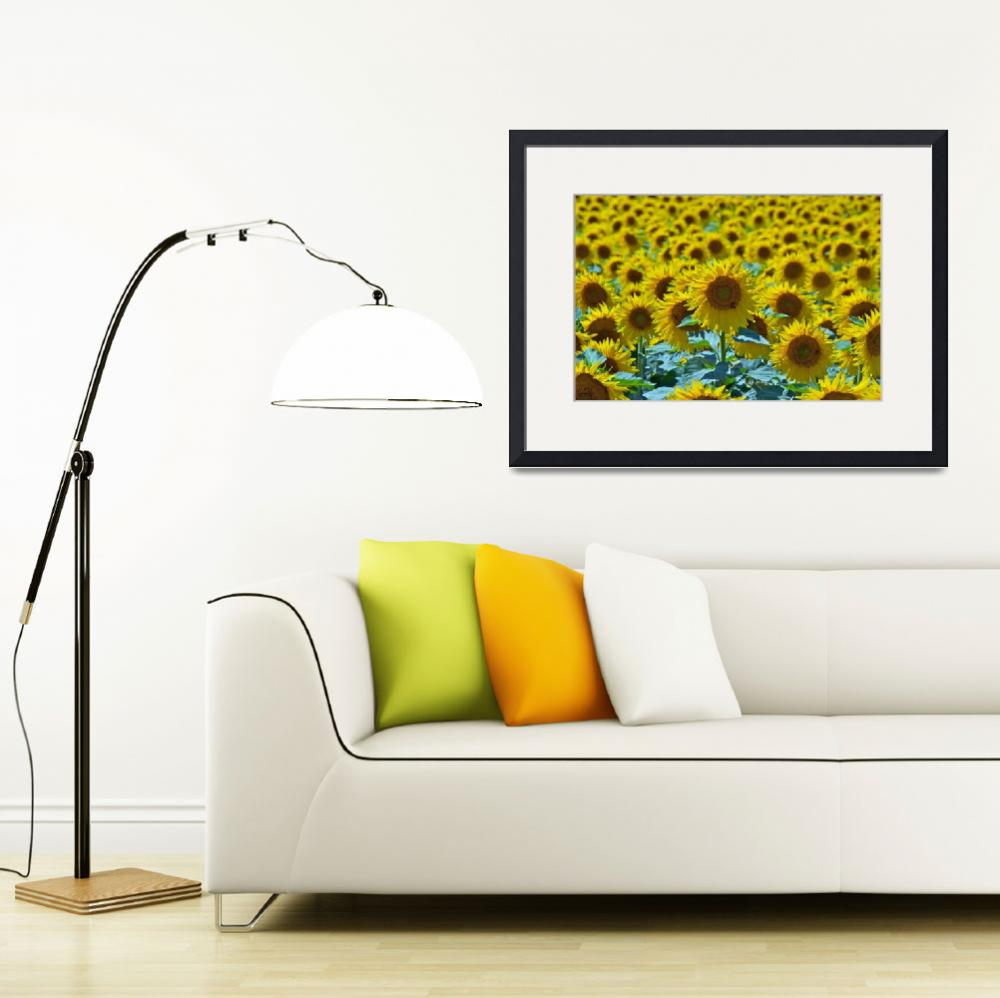 """Sunflowers&quot  (2010) by ImageArt-Photography"