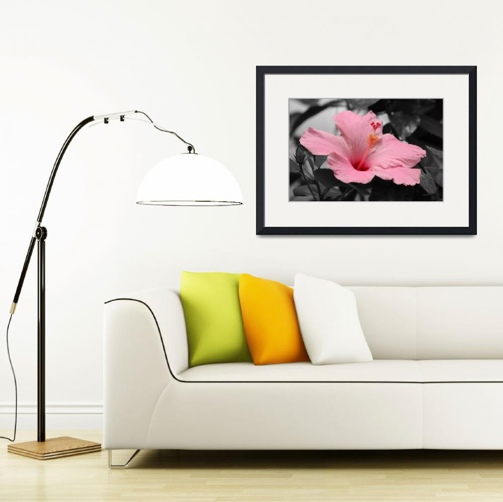 """Hibiscus in a Black & White World&quot  (2011) by kenrainwaterphotography"
