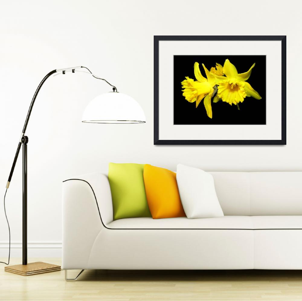 """Daffodils&quot  (2009) by Luciajo"