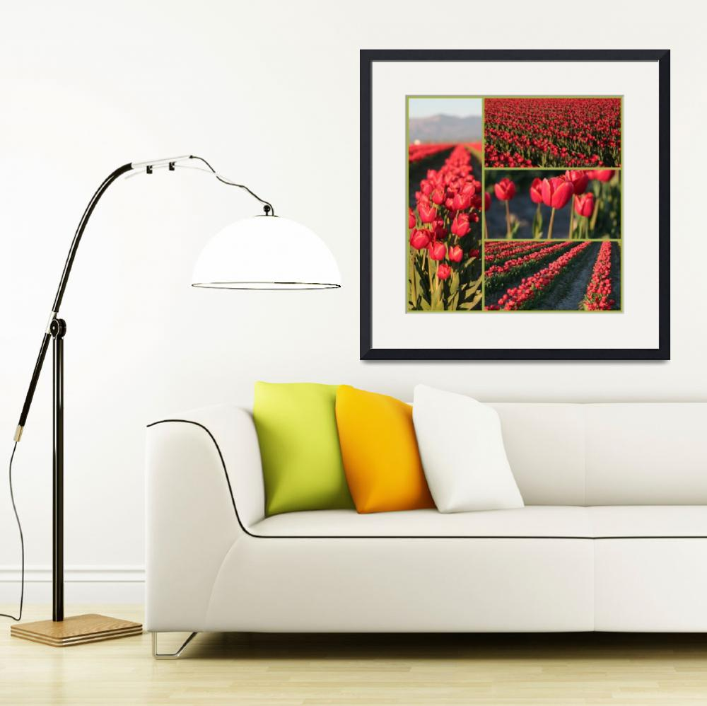 """Rows of Red Tulips Collage&quot  by Groecar"