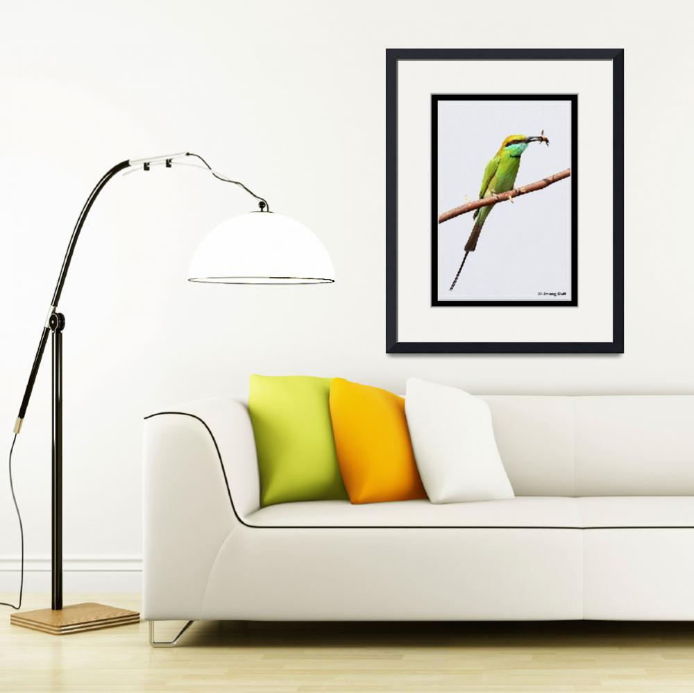 """The Little Green Bee-eater ( Merops orientalis)&quot  (2007) by umang"