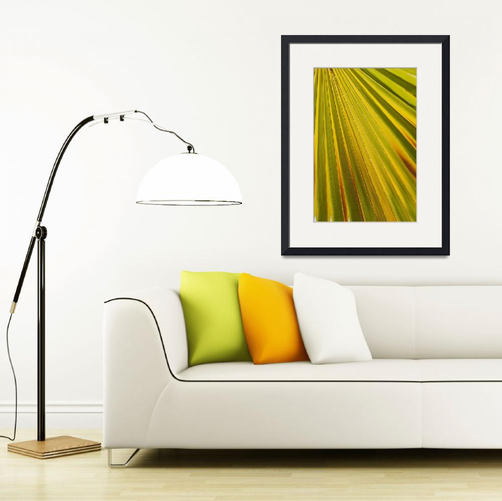 """Close Up Of Palm Leaf, Palm Springs, California&quot  by DesignPics"