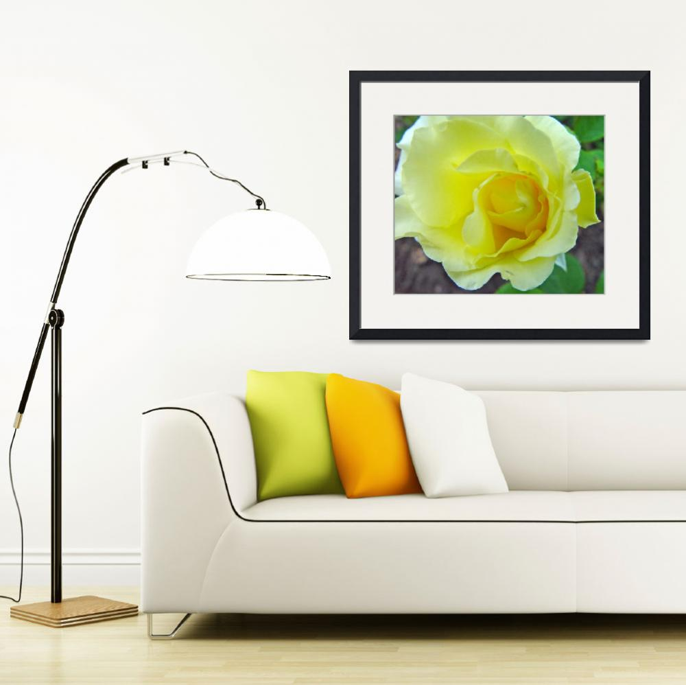 """Yellow Rose Off Center&quot  (2010) by bleij50"