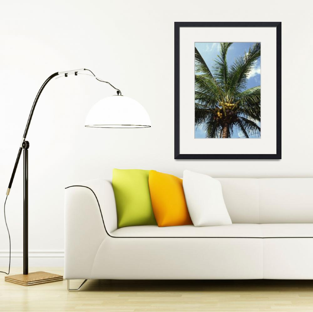 """Coconut Palm Tree&quot  by Alleycatshirts"