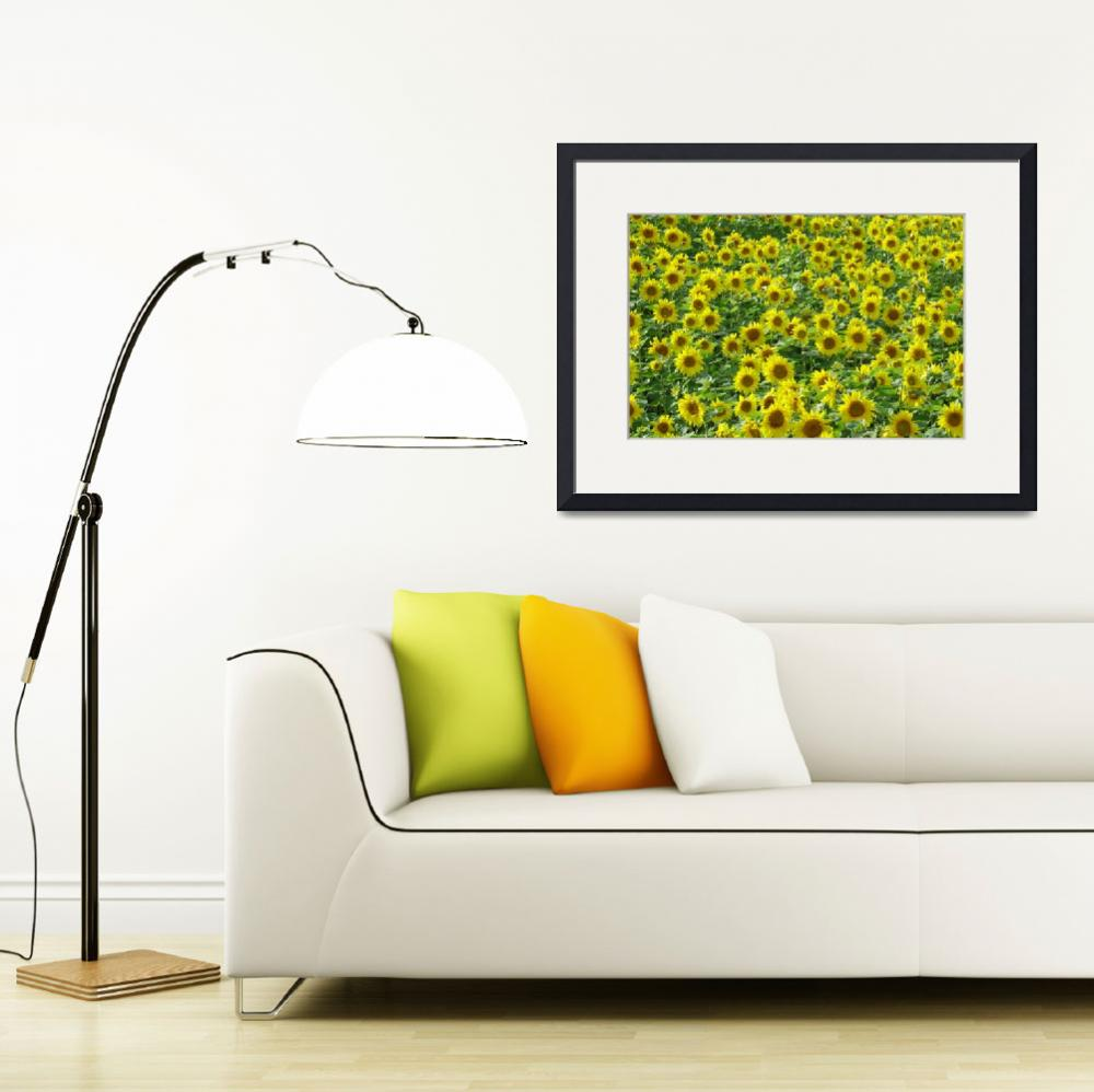 """Sunflowers  (14802-RD)&quot  (2007) by rodjohnson"