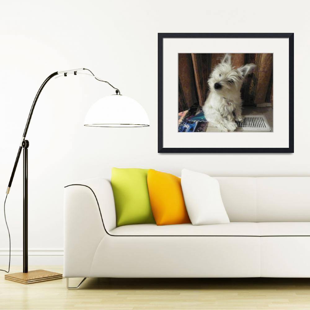 """Curious Miss Daisy - West Highland White Terrier&quot  by artsandi"