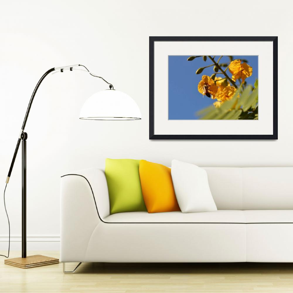 """Honeybee on Orange Flowers&quot  (2012) by theblueplanet"