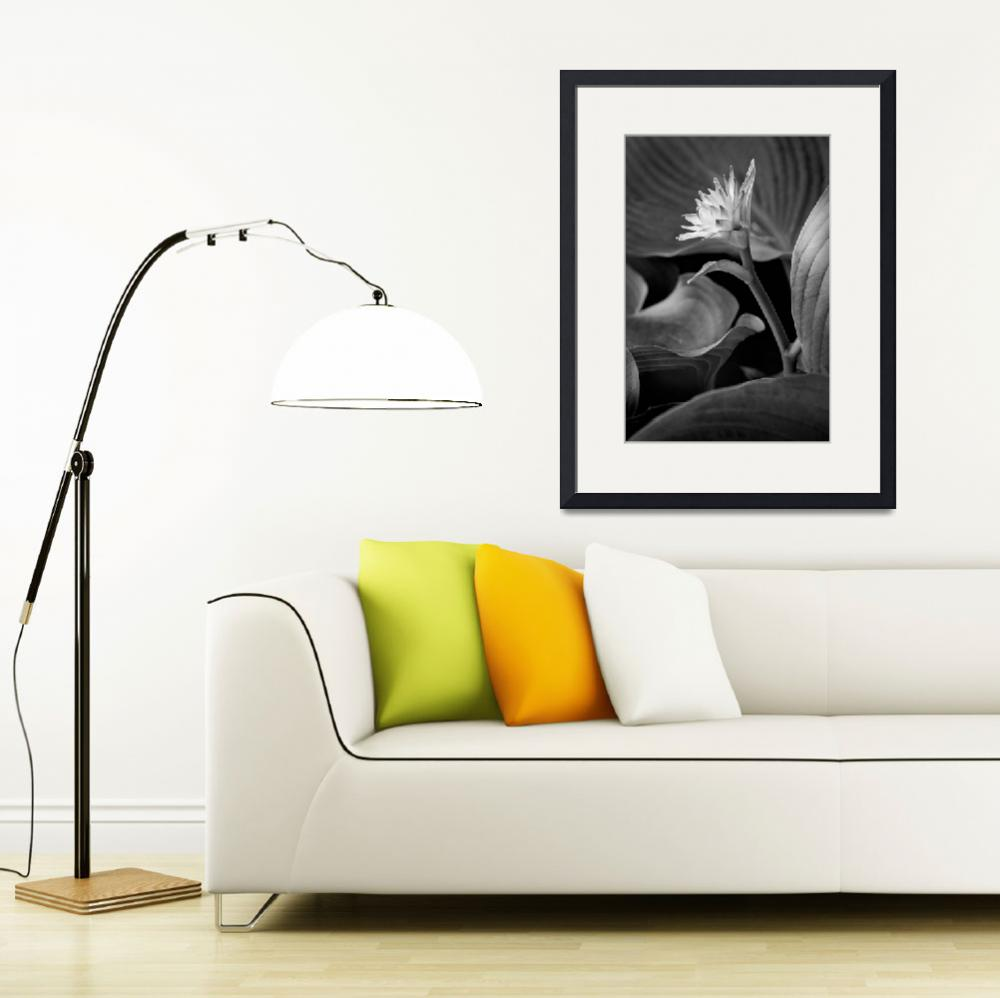 """New Hosta Flower&quot  (2008) by RussMartinPhotography"