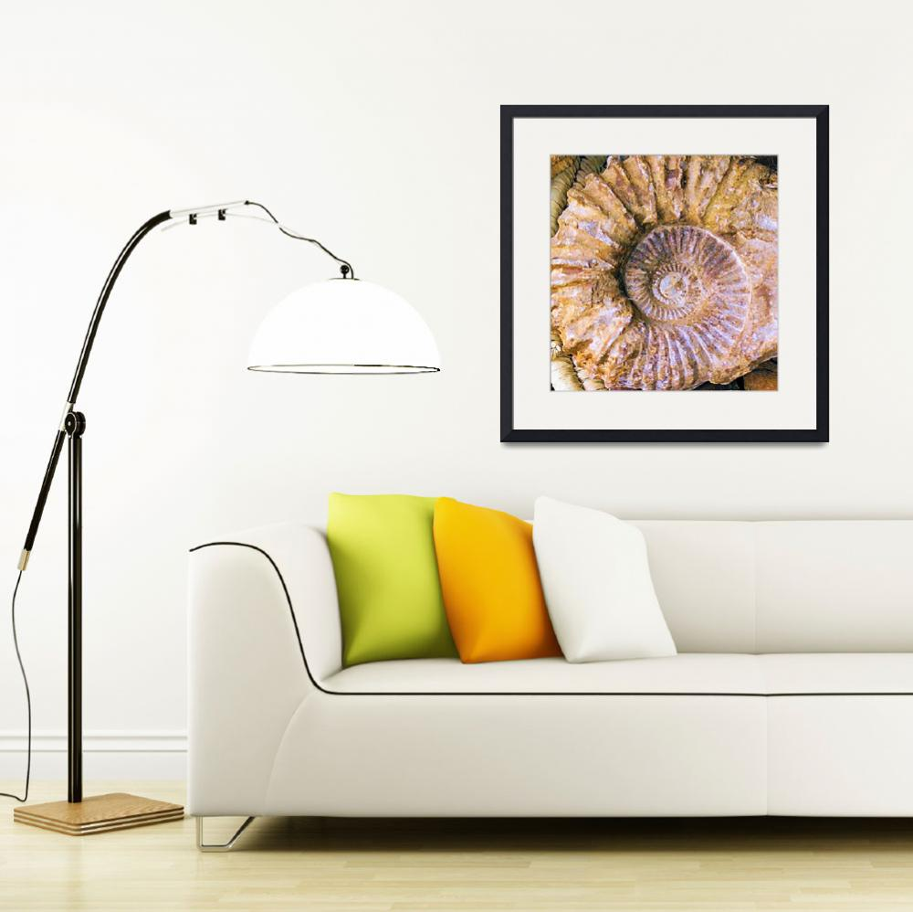 """Ammonite Fossil&quot  (2012) by brianraggatt"