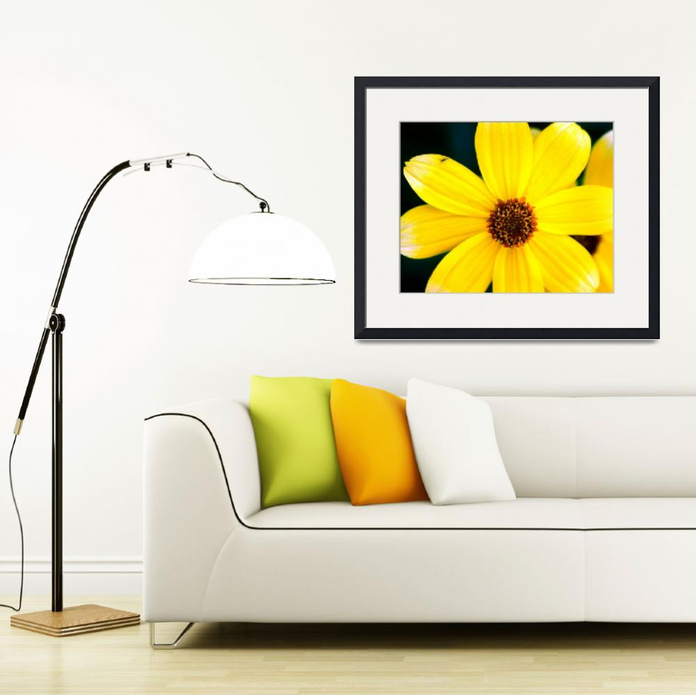 """1 Yellow Daisy&quot  (1997) by buffaloworks"
