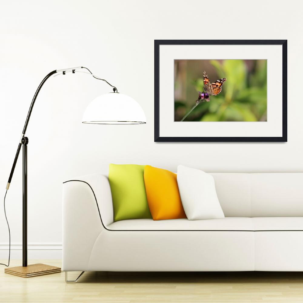 """American Painted Lady Butterfly 2016_IMG_2084&quot  by KsWorldArt"