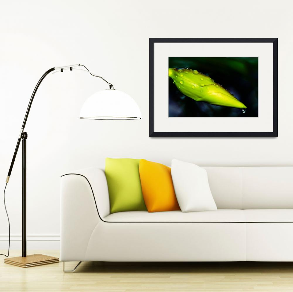 """Dew drops on fresh Allamanda bud&quot  by naturespaintbox"