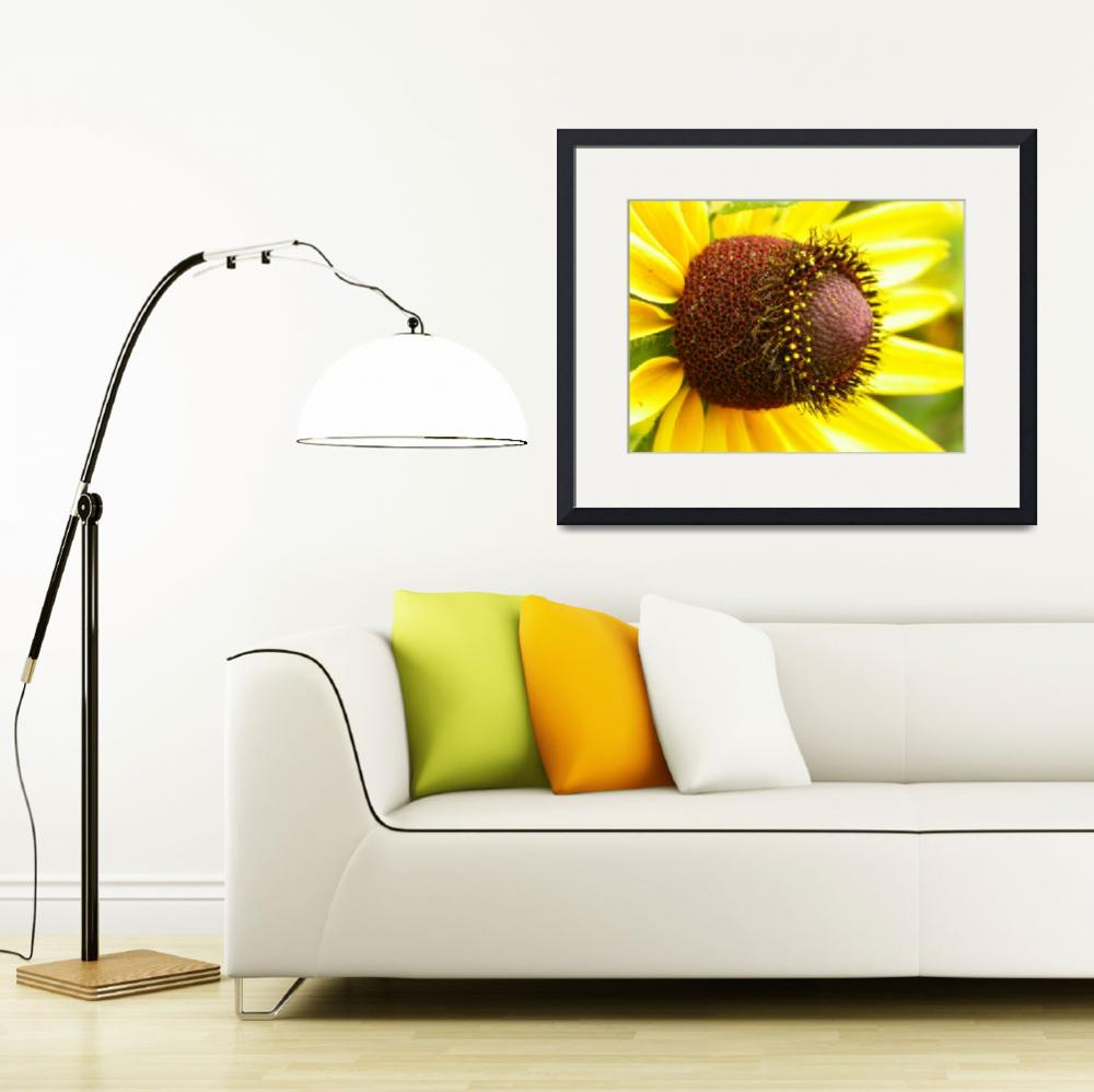 """Beautiful Black Eyed Susans&quot  (2012) by vpicks"