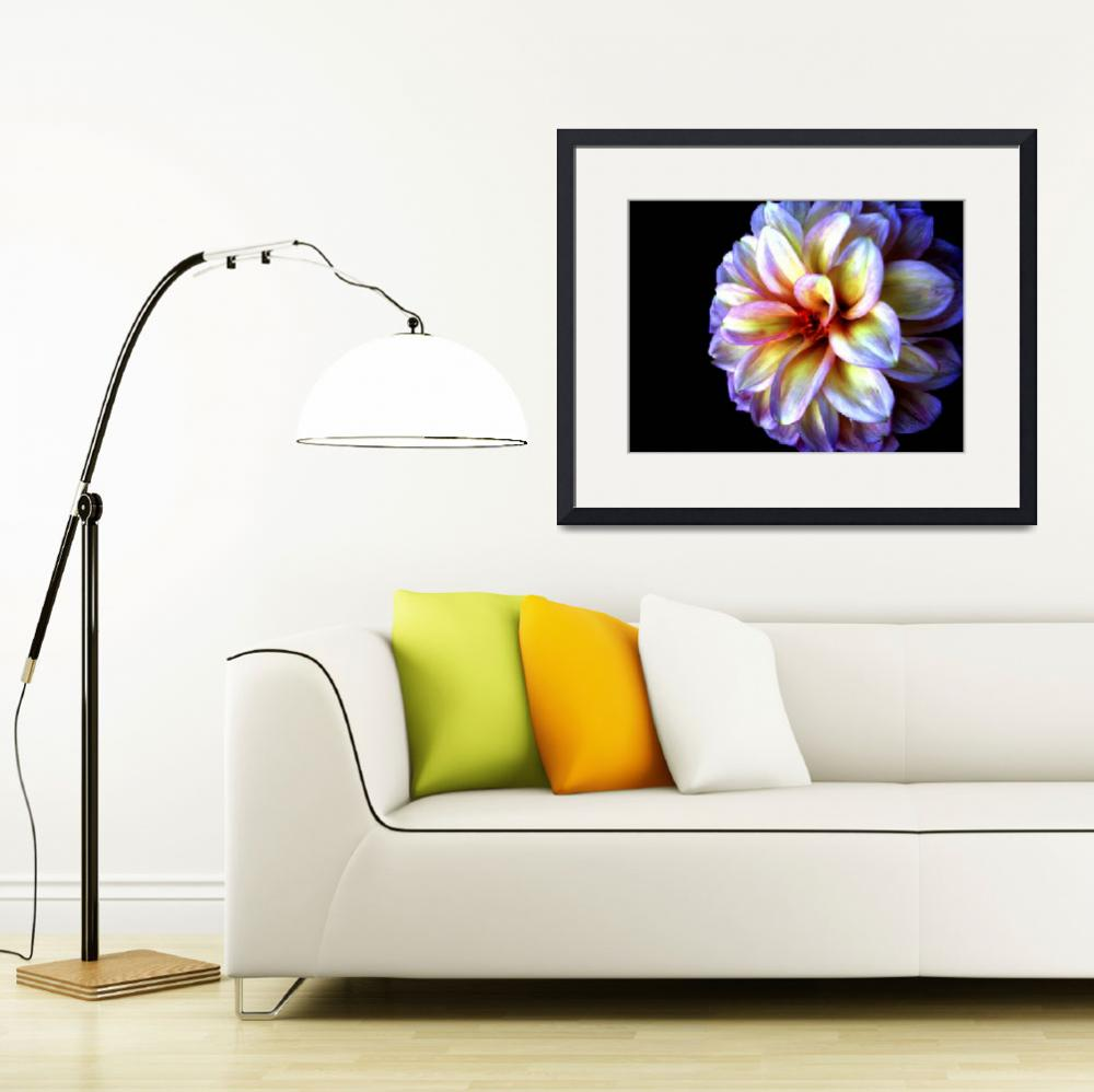 """Light In Darkness Dahlia Flower&quot  (2007) by SoulfulPhotos"