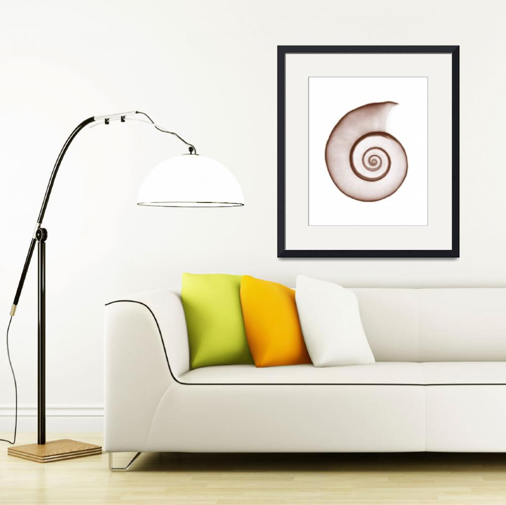 """Snail Shell&quot  (1973) by DennisMash"