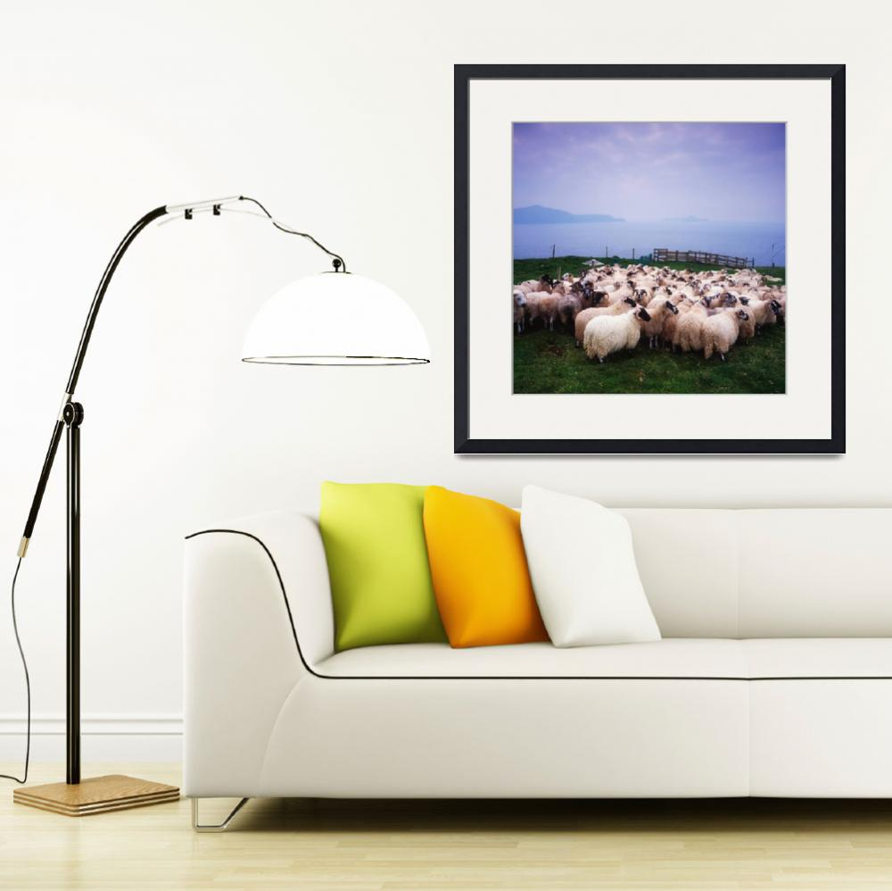 """Herding Sheep, Inishtooskert, Blasket Islands, Co&quot  by DesignPics"