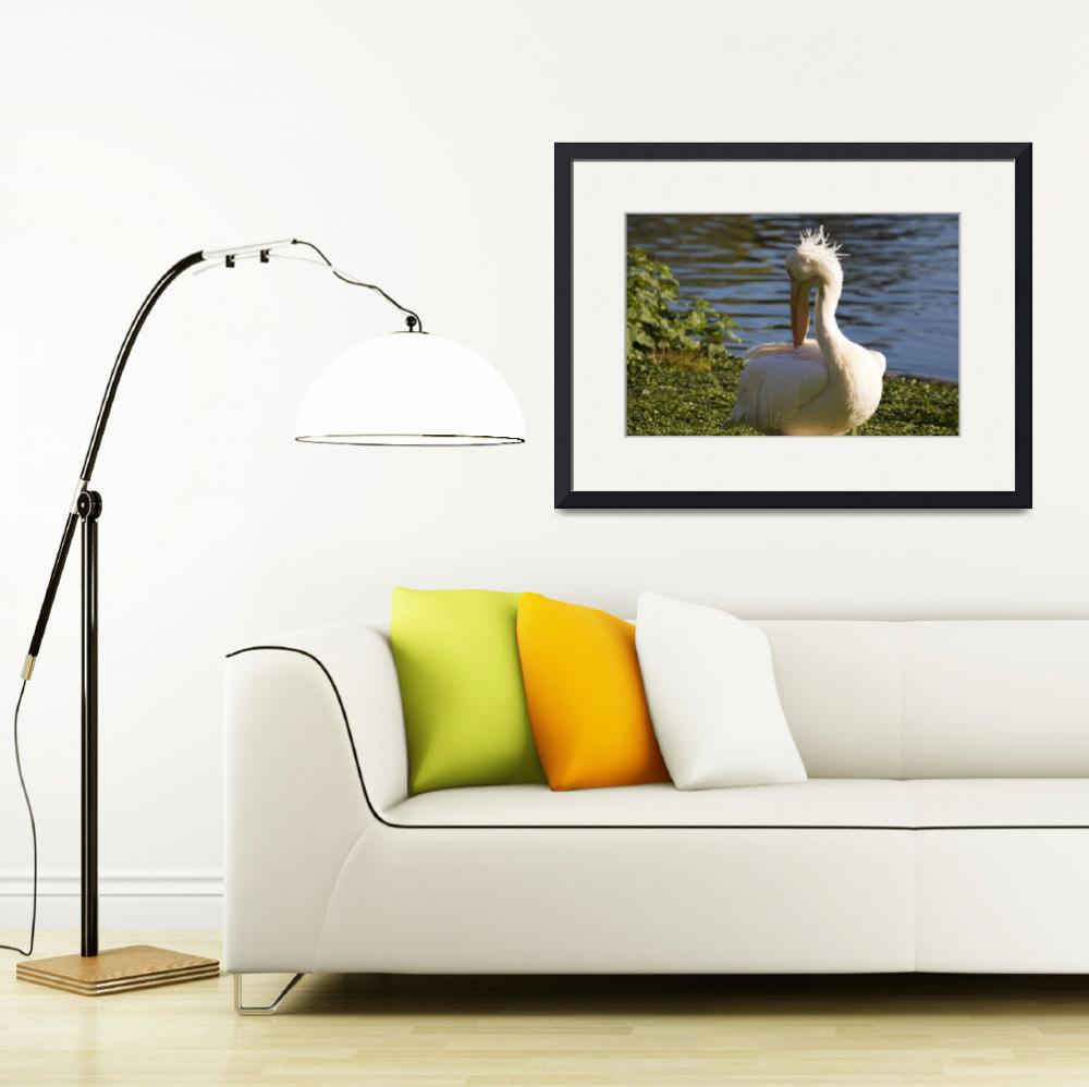 """White Pelican&quot  by travelpicspro"