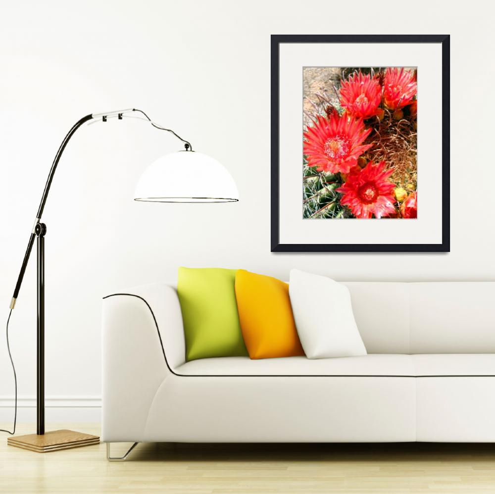 """Red Barrel Cactus Flowers 1&quot  (2009) by MyHartArt"
