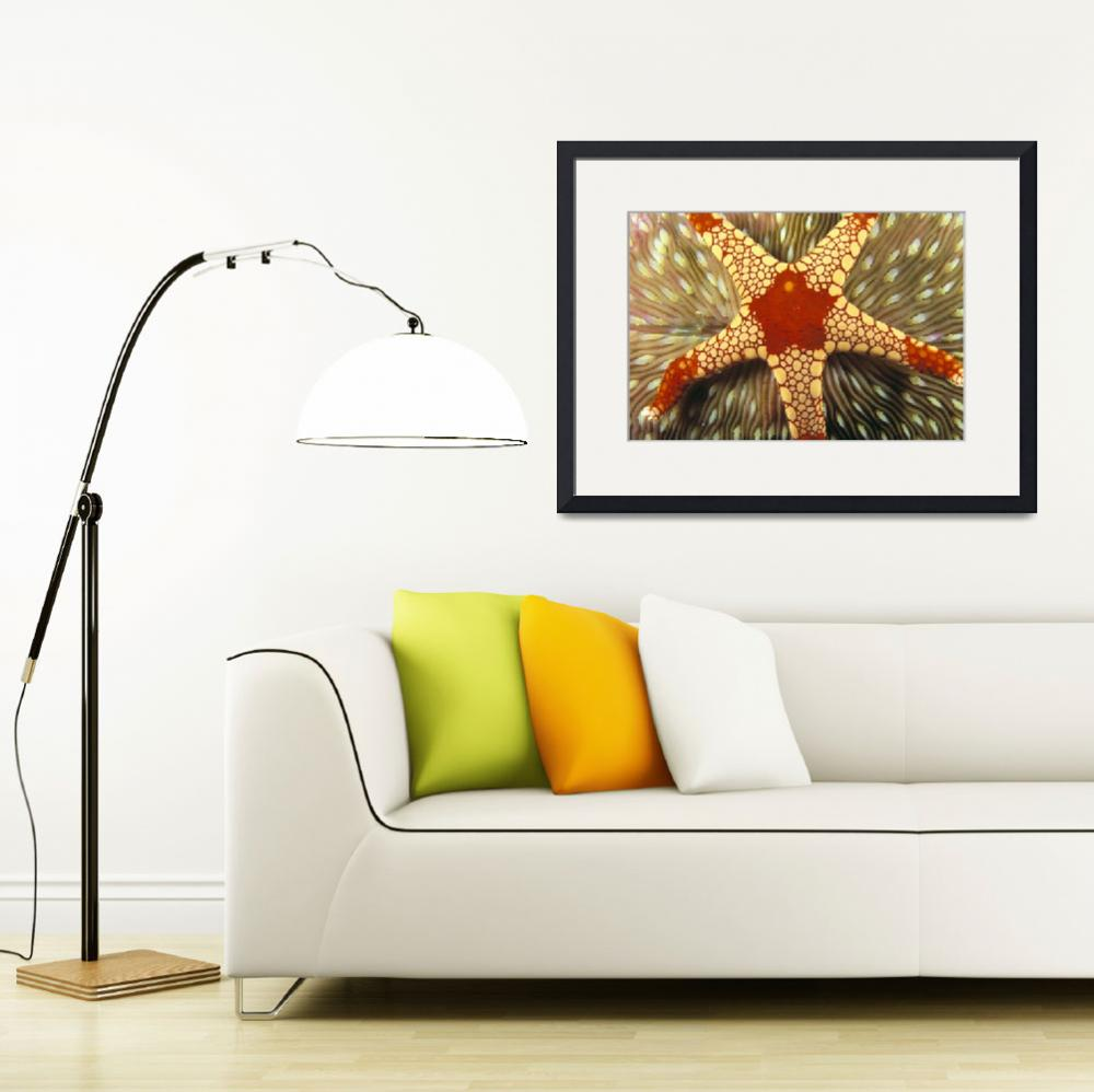 """Indonesia, Yellow And Red Sea Star On Mushroom Cor&quot  by DesignPics"