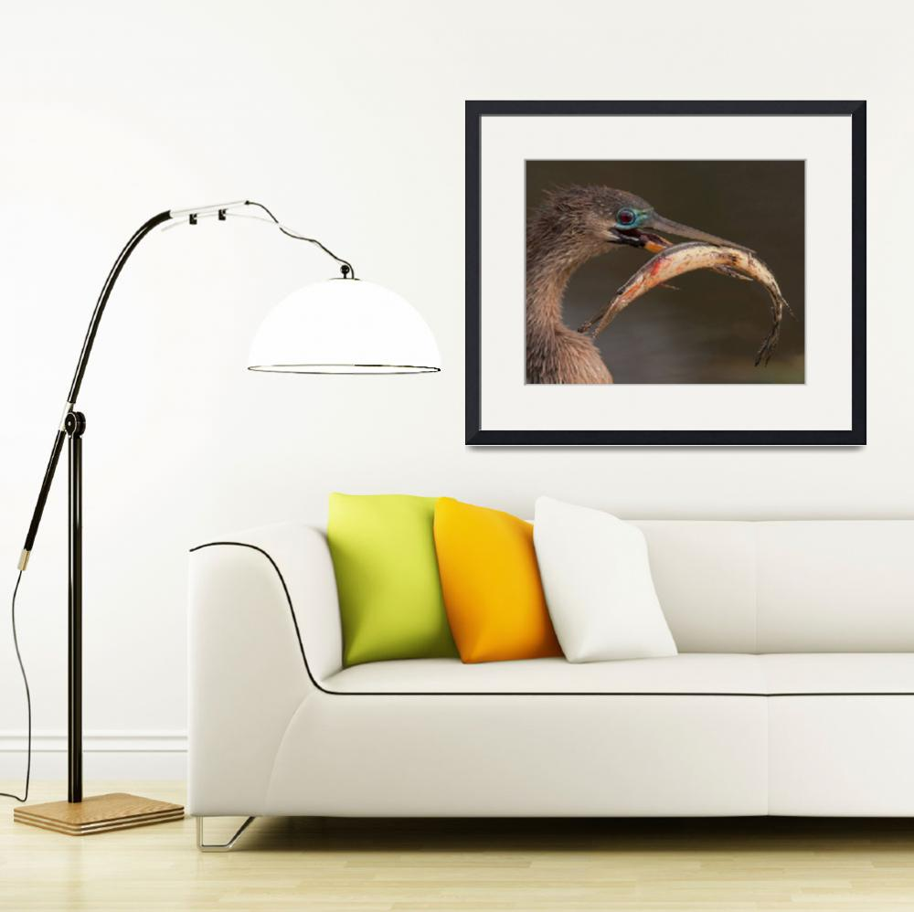 """Happy Anhinga&quot  by WorldDesign"