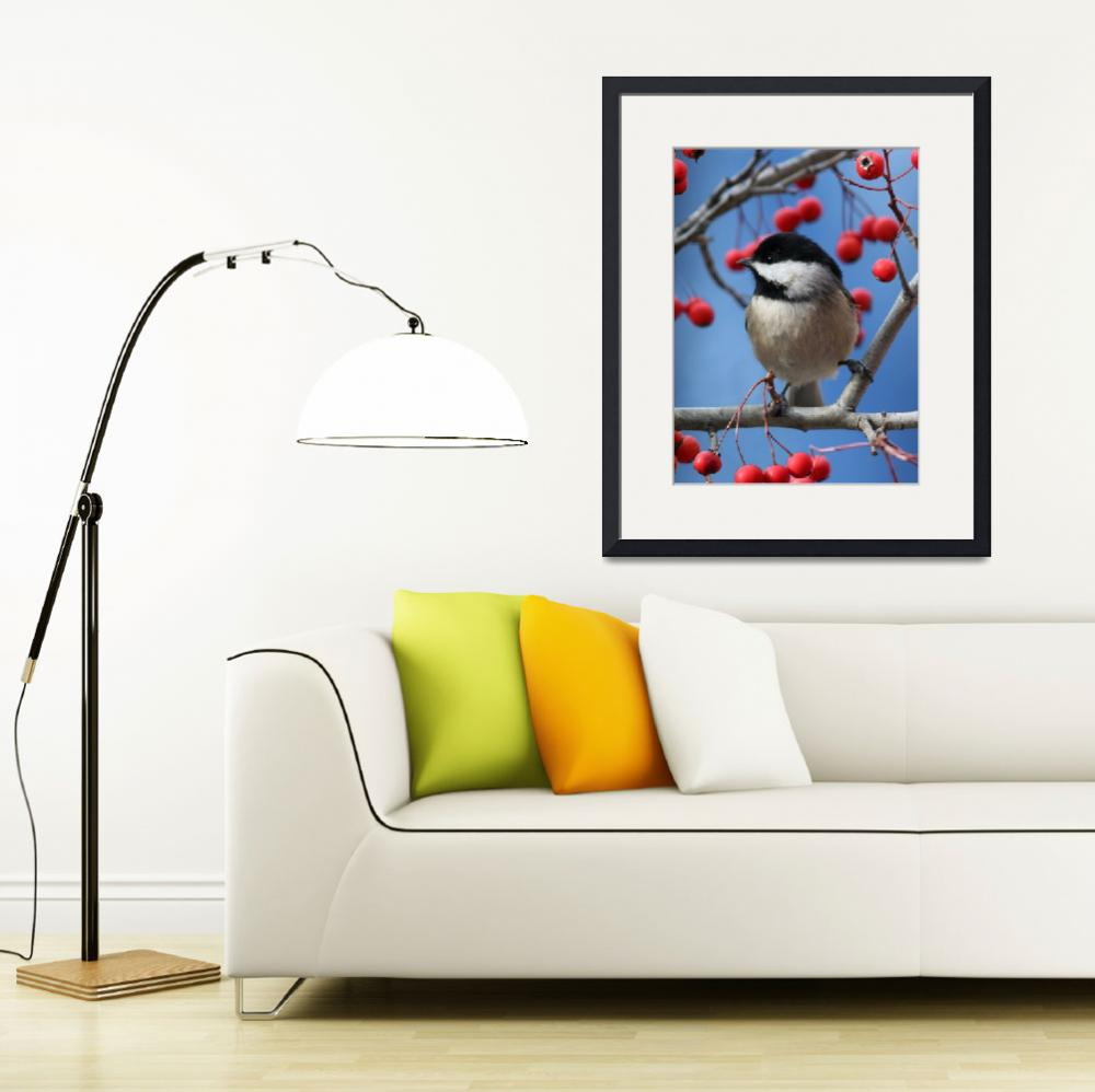 """Carolina Chickadee - Perched on Branch 2&quot  (2008) by mindseyecreative"