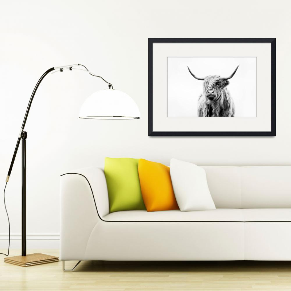 """portrait of a highland cow&quot  (2011) by doritfuhgphotography"