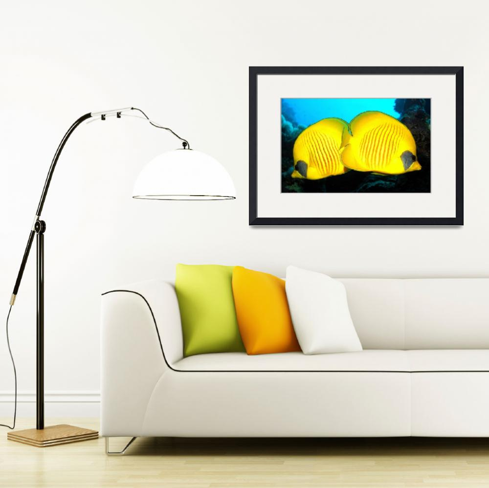 """Yellow Diskfish&quot  (2007) by JoaoPonces"
