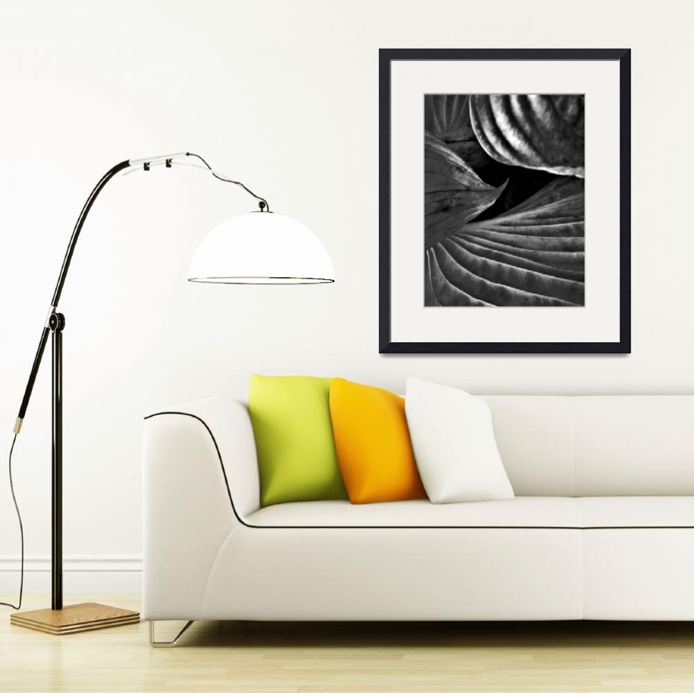 """Hosta Leaves&quot  (2009) by bavosiphotoart"