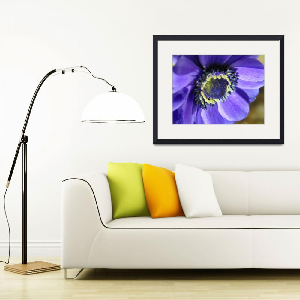 """Crown Anemone Anemone Coronaria Mona Lisa  Anemone&quot  (2012) by vpicks"