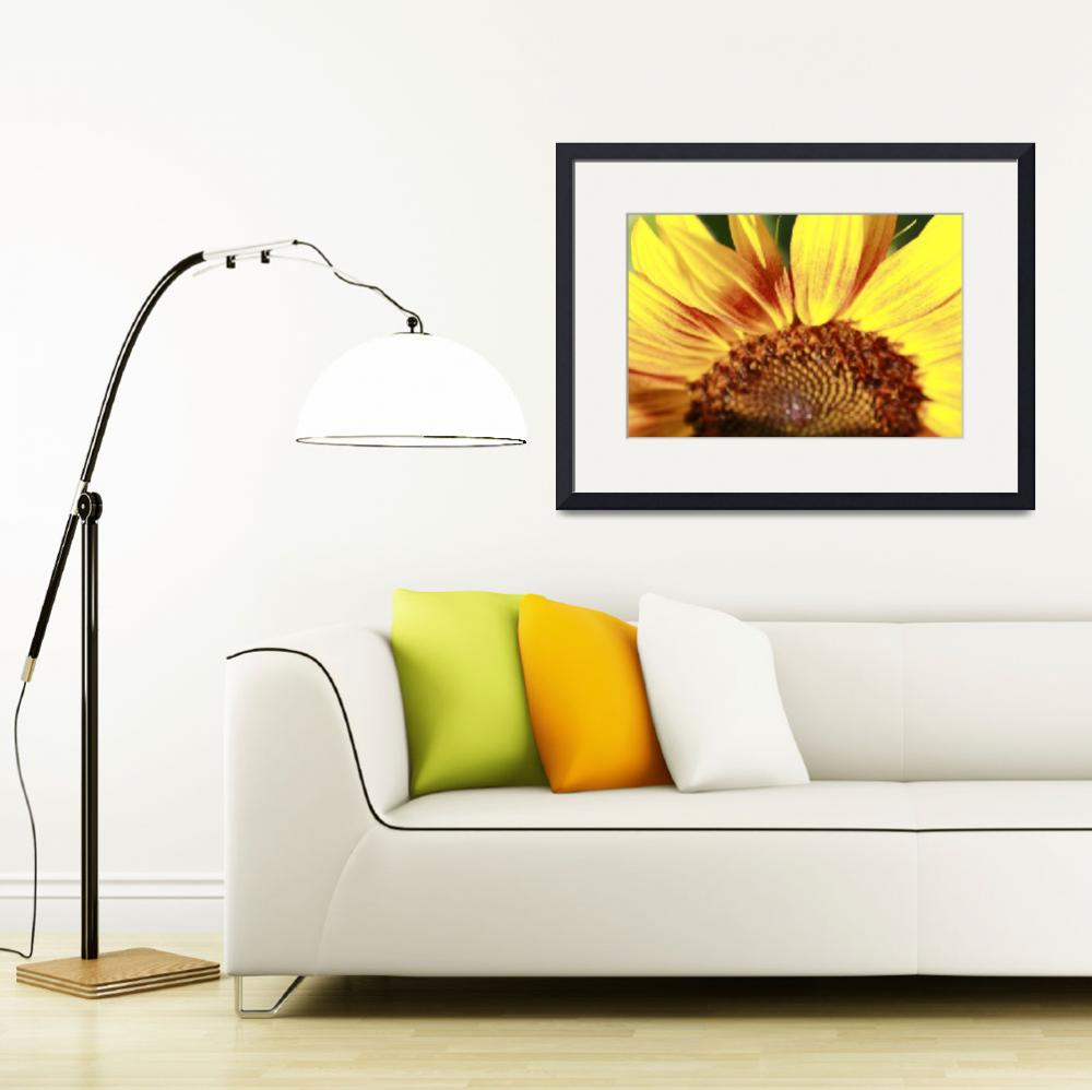 """Sunflower&quot  (2010) by VisualAppearance"