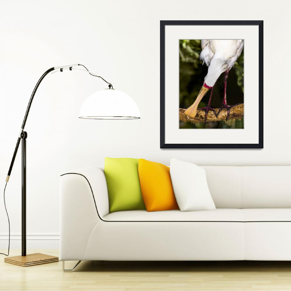 """Yellow-billed Spoonbill, Port Douglas, Queensland&quot  (2013) by MrBennettkent"