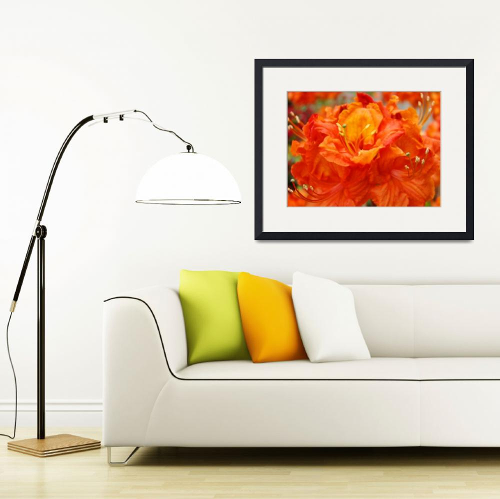 """Christmas Gift Gallery Orange RHODIES Art Gifts&quot  (2009) by BasleeTroutman"