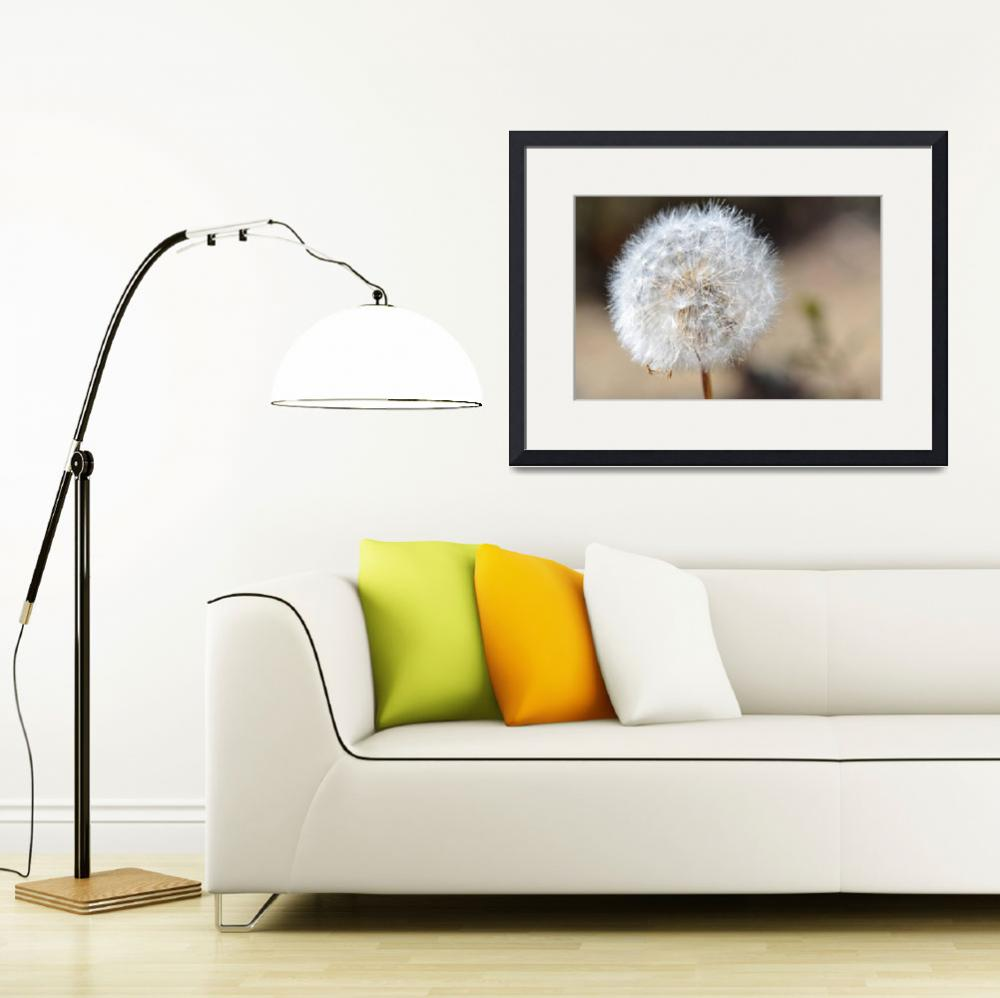 """A Dandelion Friend&quot  (2011) by SamMirani"
