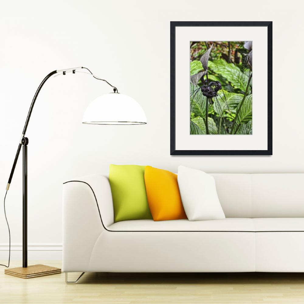 """Tacca Integrifolia&quot  (2012) by PaulCoco"