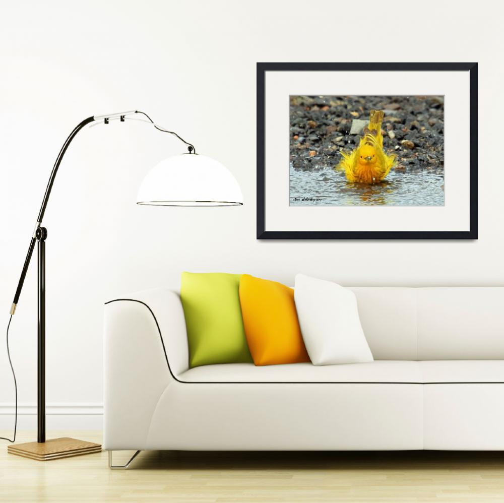 """Yellow Warbler Bathing..&quot  (2012) by shelshots"