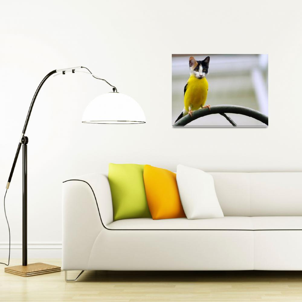 """cat bird (Photoshop Play)&quot  by bill_kerr"