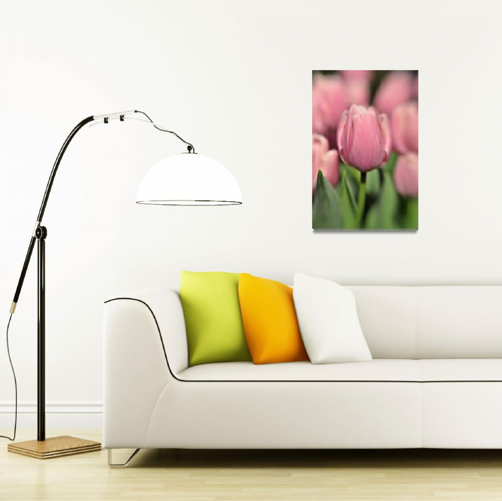 """Pink Tulips - Philadelphia Flower Show 2009&quot  (2009) by pdg"