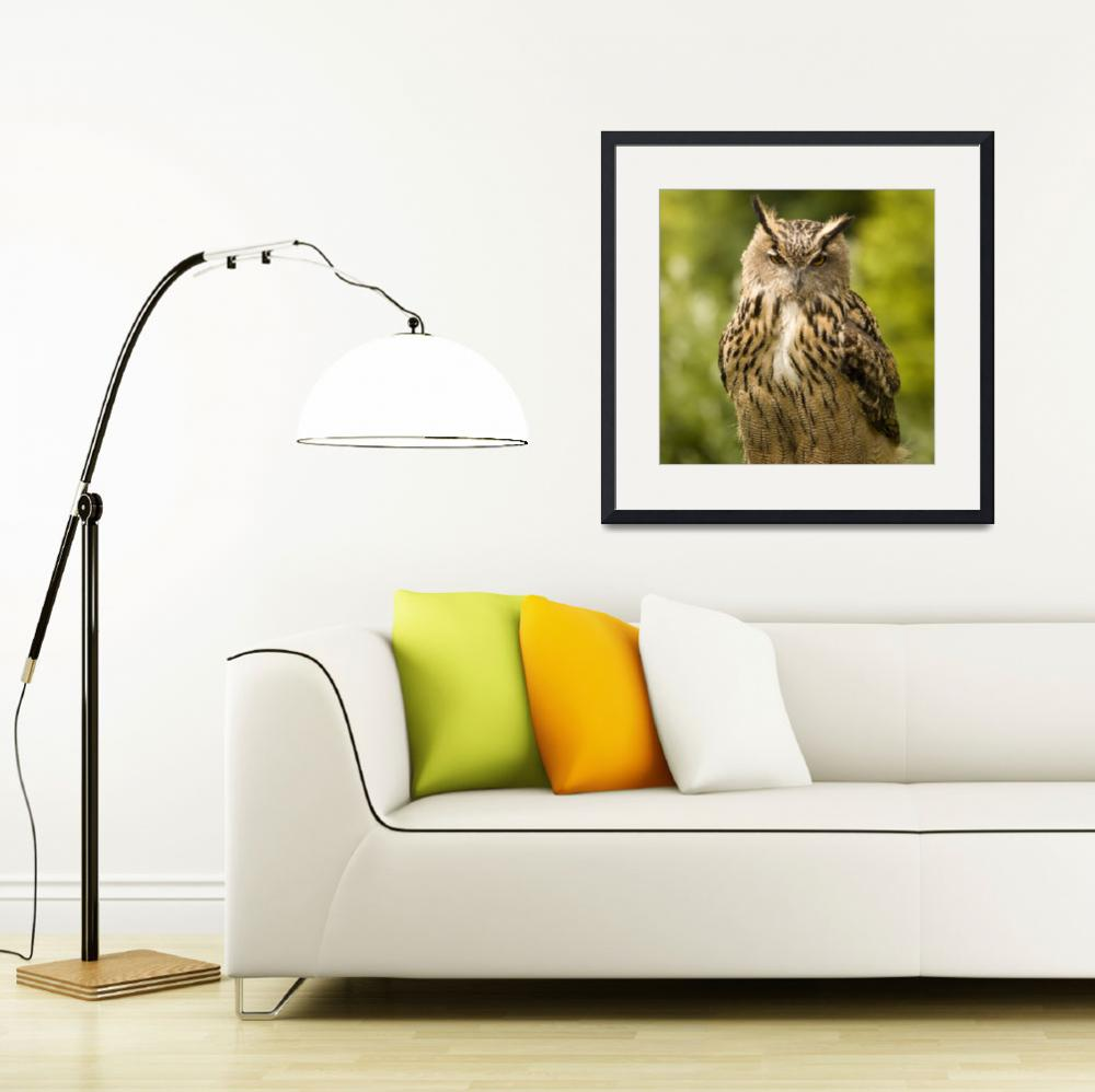 """Great horned owl&quot  (2008) by IanMiddletonphotography"
