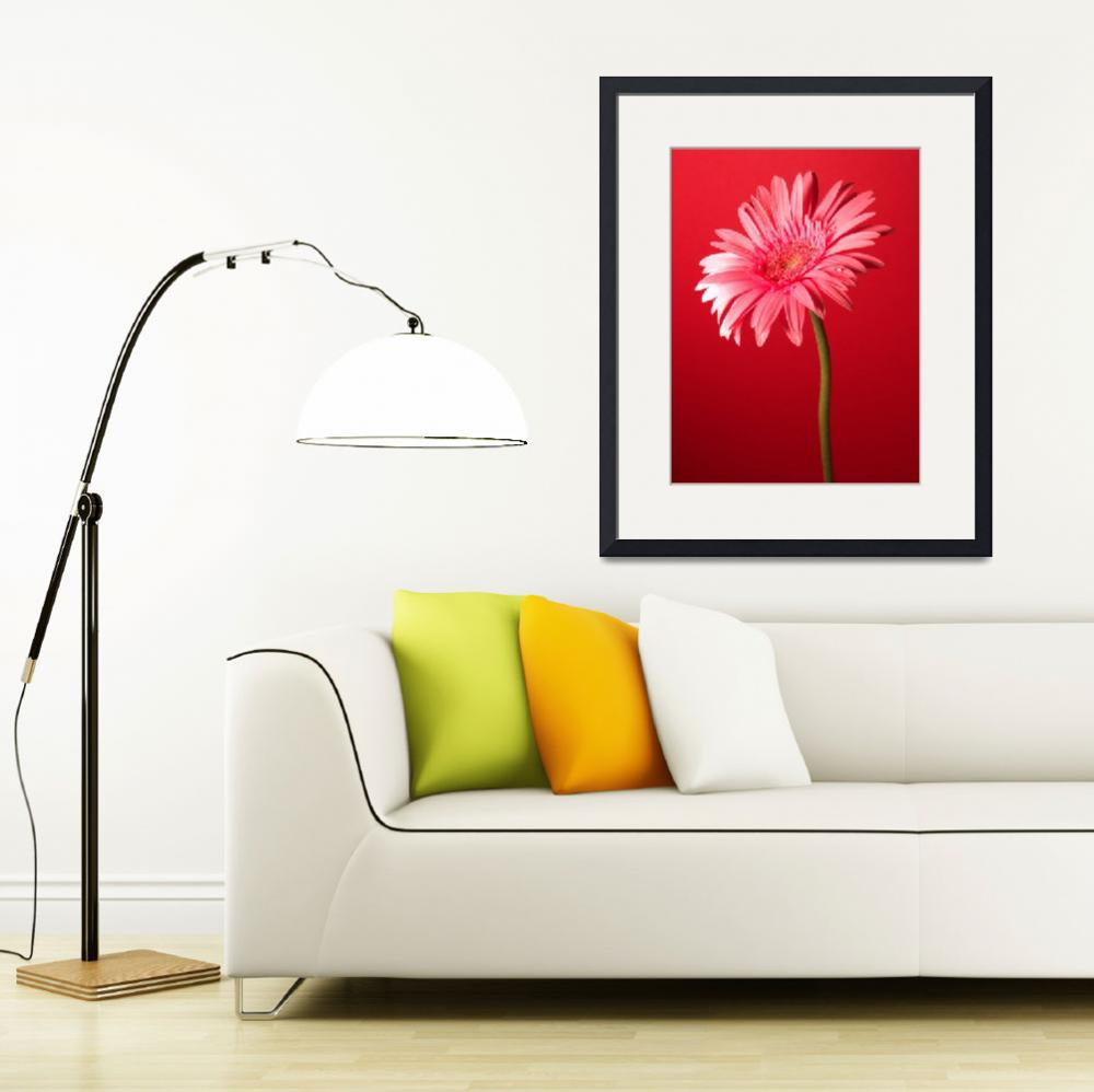 """Pink Gerbera Daisy Charming&quot  (2006) by Infomages"