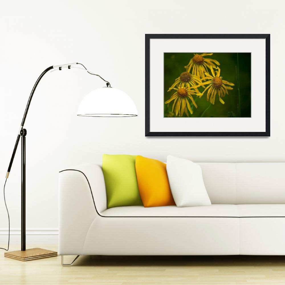 """brown eyed susan&quot  (2009) by Mac"