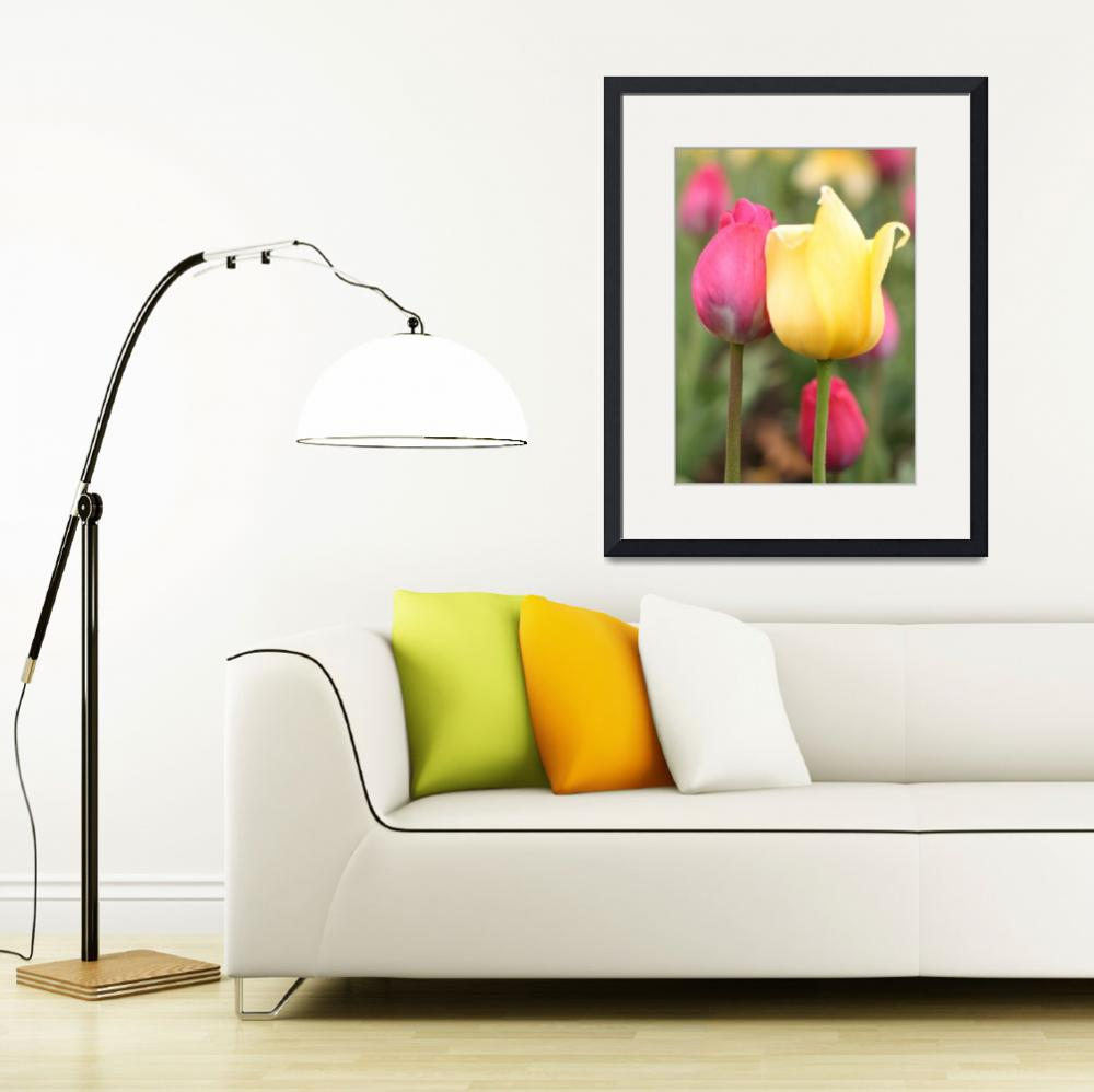 """yellow and pink tulips&quot  (2010) by kendellvictoria"