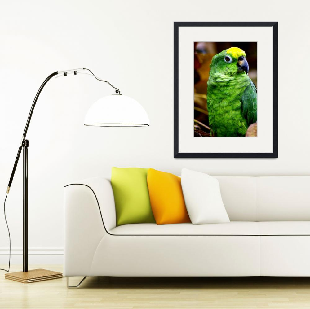 """Little green parrot&quot  (2013) by DanSteeves"