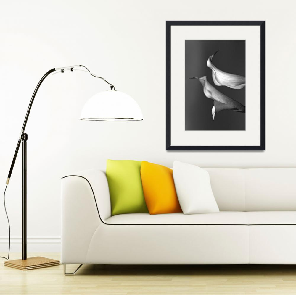 """Calla Lily V&quot  (2010) by bavosiphotoart"