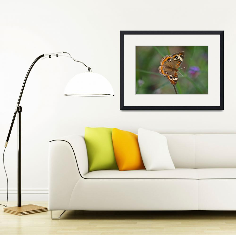 """Butterfly  Buckeye with Green background&quot  (2011) by KsWorldArt"