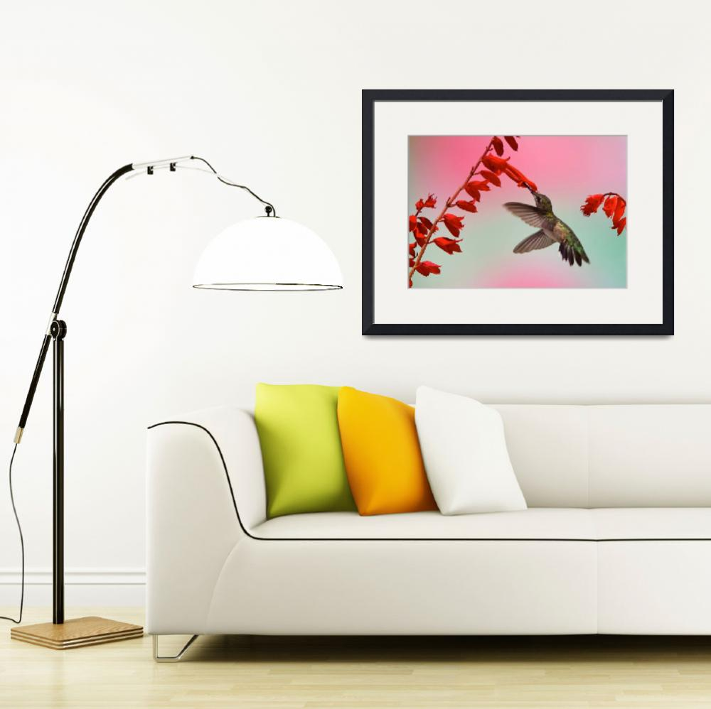 """Ruby-Throated Hummingbird - Scarlet Sage&quot  (2009) by mindseyecreative"