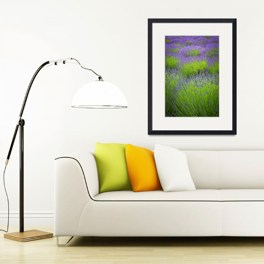"""Lavender Study&quot  (2011) by Inge-Johnsson"