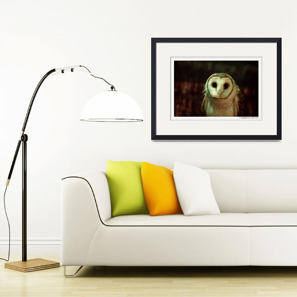 """Masked Owl: Hello&quot  (2009) by WildVisuals"