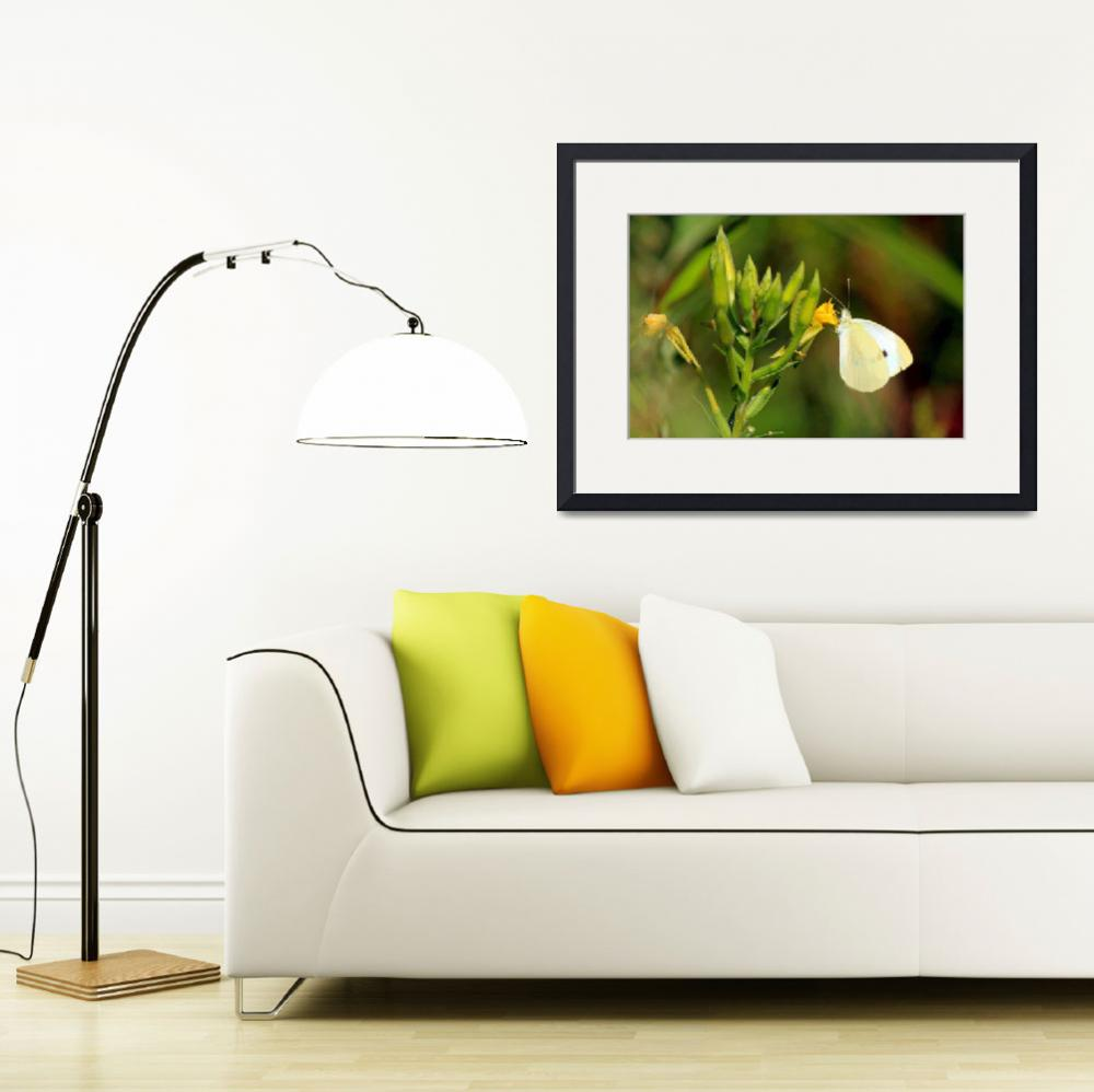 """Cabbage White&quot  (2012) by shelshots"