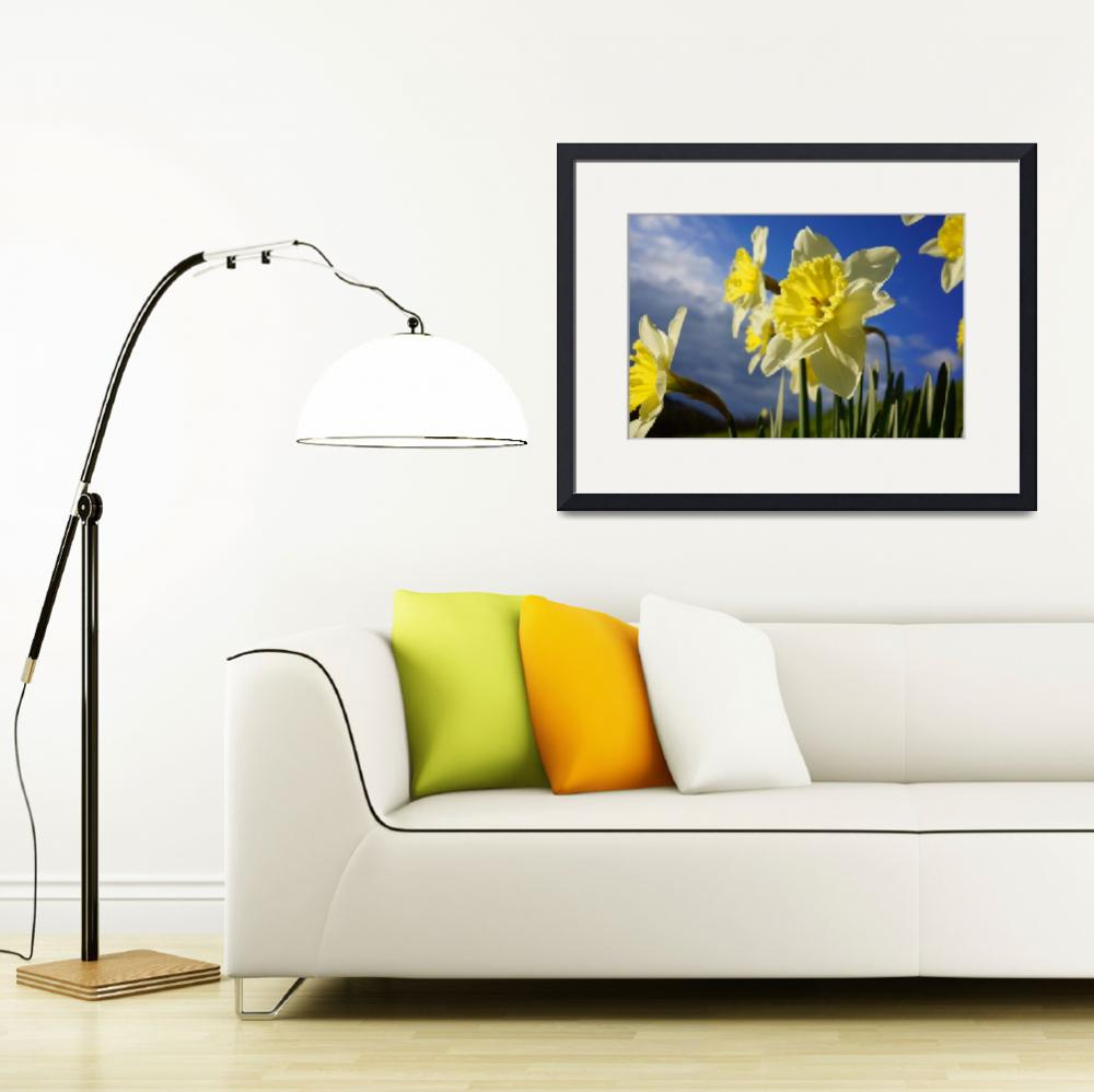 """Daffodils Flower Garden Blue Sky Clouds&quot  (2014) by BasleeTroutman"