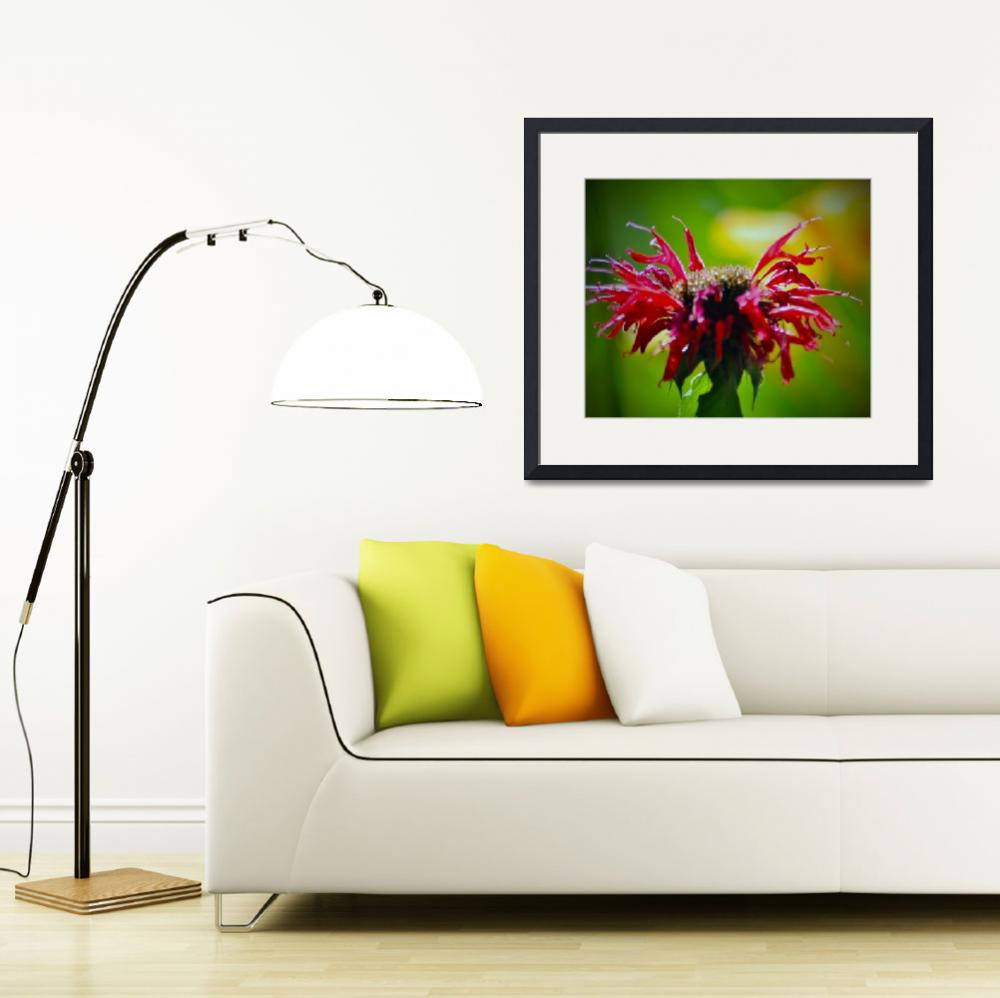 """Bee Balm Flower&quot  (2012) by LJdesigns"